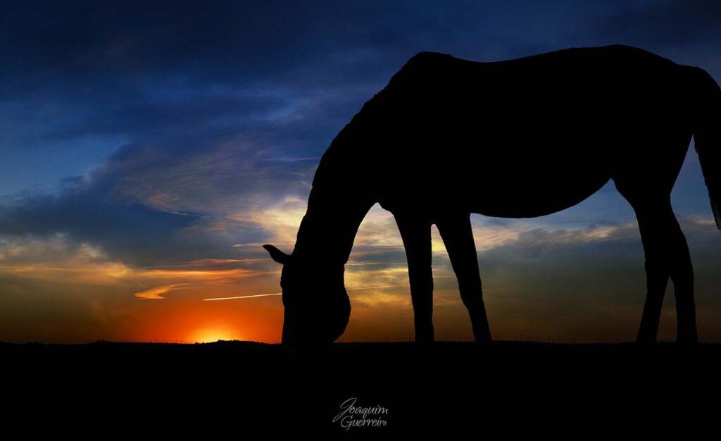Silhueta de cavalo ao por do sol