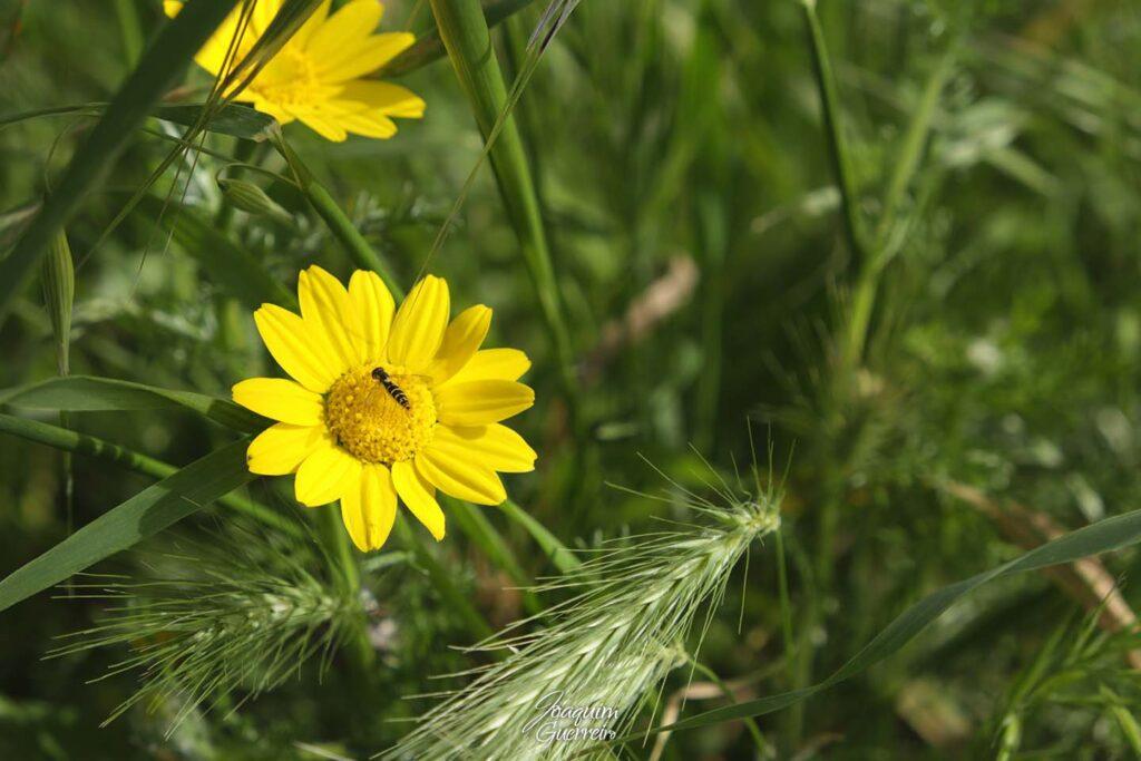 Flor silvestre com Inseto