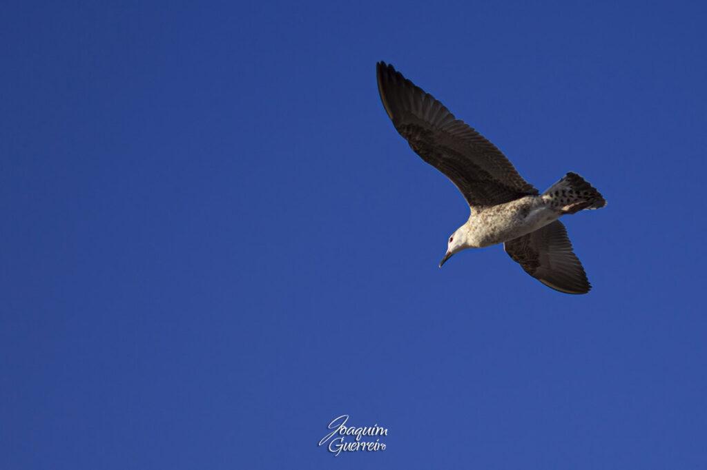 Gaivota a voar no céu azul