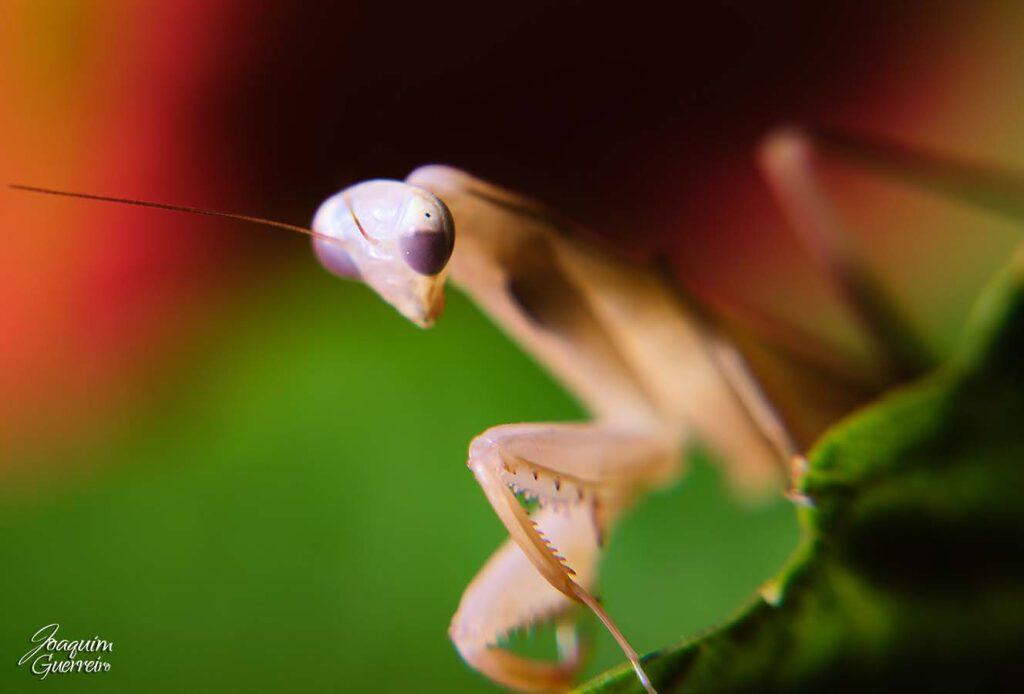 Macro foto de inseto